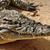 krokodil · eğlence · mutlu · dizayn · sanat · ağız - stok fotoğraf © sirylok