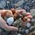 tenger · kagylók · kövek · tengerpart · textúra · háttér - stock fotó © sirylok