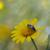 abelha · natureza · planta · flor-de-rosa · ao · ar · livre - foto stock © sirylok