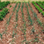produire · organique · vert · oignons · écran - photo stock © sirylok