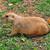 préri · kutya · természetes · élőhely · gyűlés · állat - stock fotó © sirylok
