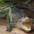 vad · krokodil · szem · természet · háttér · Afrika - stock fotó © sirylok