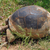 reus · schildpad · gevangenis · eiland · natuur · benen - stockfoto © sirylok