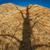 ahşap · cips - stok fotoğraf © skylight