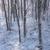 sneeuw · gedekt · boom · berk · hout - stockfoto © skylight