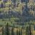 jesienią · mieszany · lasu · piękna · drzewo - zdjęcia stock © skylight