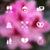 romantische · ui · navigatie · paneel · knoppen - stockfoto © smeagorl