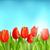 voorjaar · uitnodiging · tulpen · bloemen · briefkaart - stockfoto © smeagorl