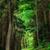erdő · ősi · fa · fény · béke · álom - stock fotó © smileus