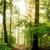 тумана · Лучи · деревья · дерево · лист - Сток-фото © smileus