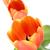 весенние · цветы · три · красивой · тюльпаны · саду · цветок - Сток-фото © smileus
