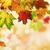 мелкий · Focus · осень · клен · листьев - Сток-фото © smileus