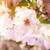 wiosną · drzewo · kwiaty · kwiat · kwitnąć · ciepły - zdjęcia stock © smileus