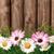 witte · bloemen · blauwe · hemel · hemel · zon - stockfoto © smileus