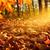 levelek · napfény · fényes · erős · zöld · fa - stock fotó © smileus