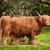 vaca · prado · outono · animal · touro · agricultura - foto stock © smileus