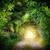 piękna · tunelu · drzew · zielone · tekstury · drzewo - zdjęcia stock © smileus
