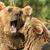 two bears fighting in their habitat stock photo © smileus
