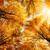 autunno · sole · splendente · caldo · bella - foto d'archivio © smileus