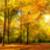 warm · zonnestralen · bos · boom · groene · winter - stockfoto © smileus