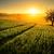 mező · fa · alkonyat · égbolt · Németország · fény - stock fotó © smileus