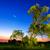 illuminated old tree at nightfall stock photo © smileus