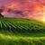 pôr · do · sol · panorama · céu · vibrante · nuvens · ver - foto stock © smileus