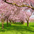 scenic park with blossoming trees stock photo © smileus