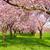 zöld · tavasz · fák · sikátor · gyönyörű · aszfalt - stock fotó © smileus