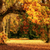 autumn scenery with a magnificent oak tree stock photo © smileus