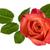 gyönyörű · piros · rózsa · szirmok · felső · kilátás · Valentin · nap - stock fotó © smileus