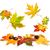autumn maple leaves beautifully falling down stock photo © smileus