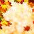 sonbahar · yaprakları · sığ · odak · sonbahar · akçaağaç · yaprakları - stok fotoğraf © smileus