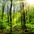 verde · vibrante · floresta · sol · brilhante · folhas - foto stock © smileus