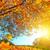 осень · солнце · красивой - Сток-фото © smileus