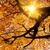 sun shining in the golden autumn stock photo © smileus