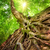 arbre · racines · belle · forêt · printemps · nuageux - photo stock © smileus