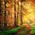 caldo · raggi · di · sole · foresta · albero · verde · inverno - foto d'archivio © smileus