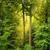 groene · boom · ontspannen · natuur · kleuren - stockfoto © smileus