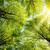 sun shining through treetops stock photo © smileus