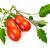 vers · gesneden · roma · tomaten · Rood · ovaal - stockfoto © smileus