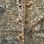 トカゲ · 隠された · 樹皮 · ツリー · クール - ストックフォト © smuay