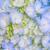 közelkép · kék · virág - stock fotó © smuay