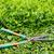 ножницы · старые · зеленый · весны · природы - Сток-фото © smuay