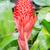 tropikalnych · kwiat · zielony · liść · biały · tablicy - zdjęcia stock © smuay