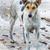 dirty dog stock photo © smuay