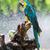 papagaio · amazona · cara · pássaro - foto stock © smuay