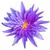 vijver · paars · water · lelie · bloem · bloeien - stockfoto © smuay