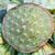 lotus · zaad · peul · geneeskunde · zwarte · plant - stockfoto © smuay