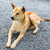 thai dog stock photo © smuay